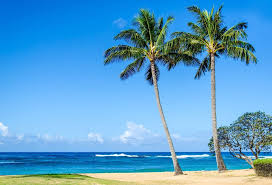 Green Screen Beach